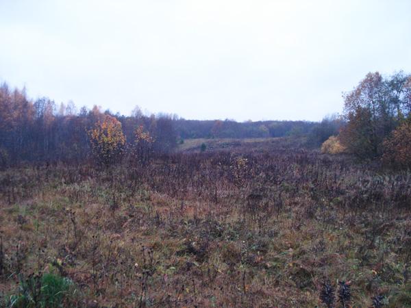 Холмы - естественный аттрибут большинства земельных участков - будущих родовых поместий!