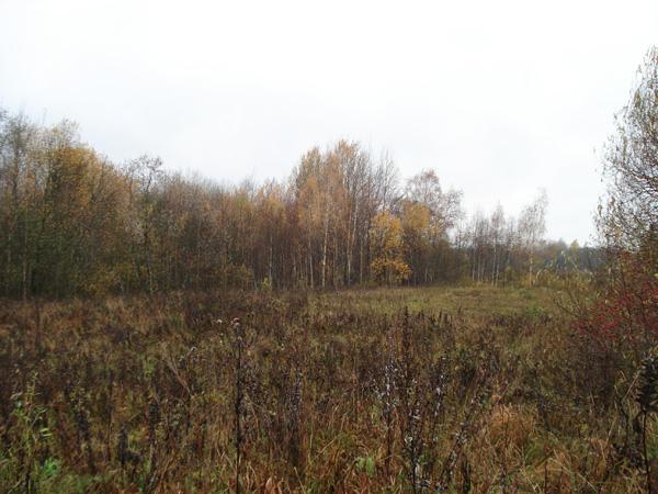 Вот так и выглядит большинство участков: полянка, огороженная естественной лесополосой...