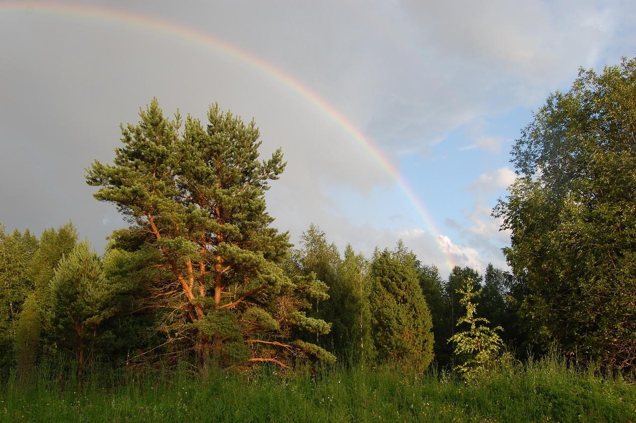 Это лето радовало нас красивейшими радугами и солнечными дождями :)
